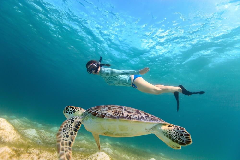 Snorkeling In St Pete Beach Gulf